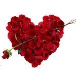 Сердечко из лепестков роз от Chelldon-